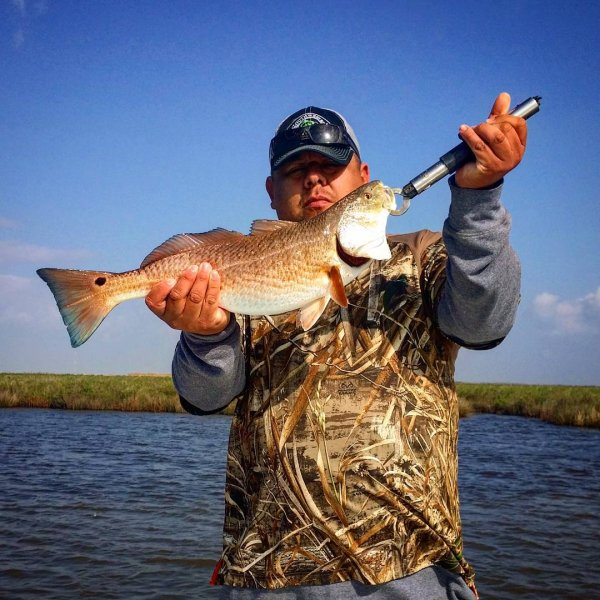 Galveston Redfish