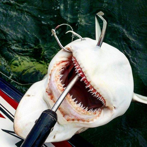 Galveston Shark Fishing