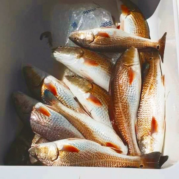 redfish guides galveston