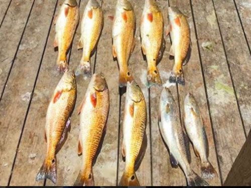 Fishing galveston tx the finest fishing charters in for Texas parks and wildlife fishing report