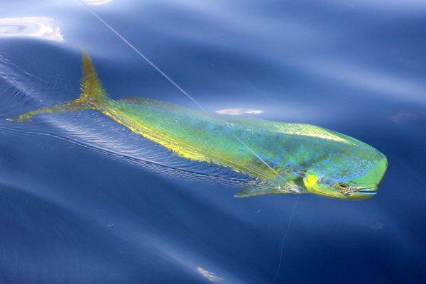 Texas Best – Galveston Deep Sea and Inland Fishing